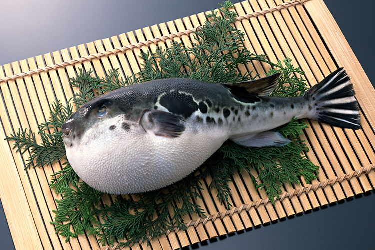 dangerous food_Fugu