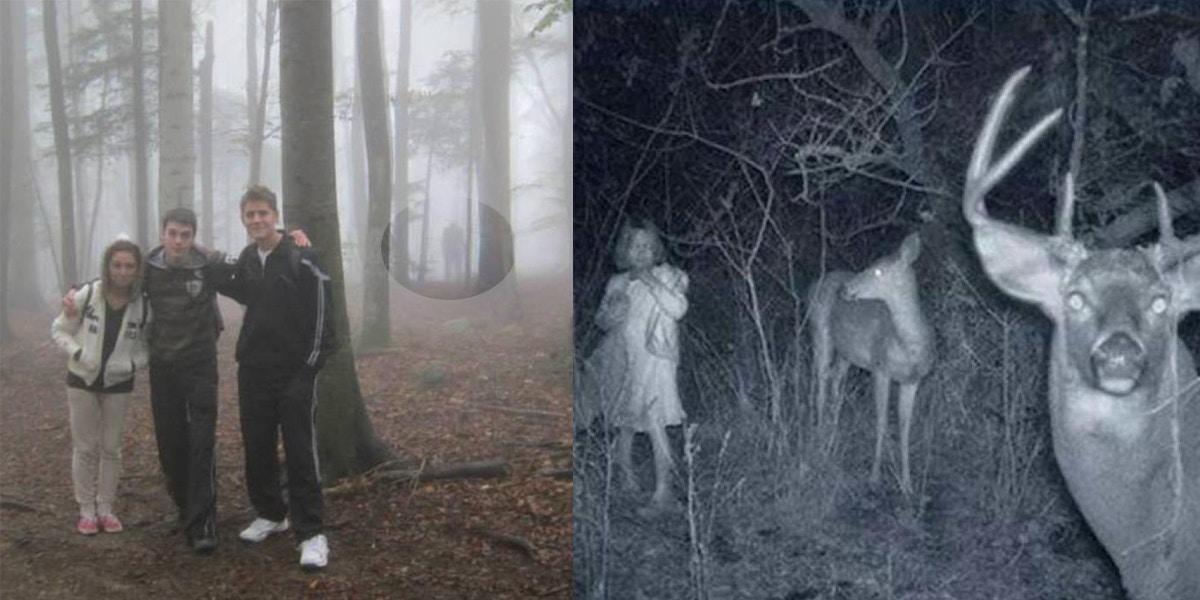 woods2-1