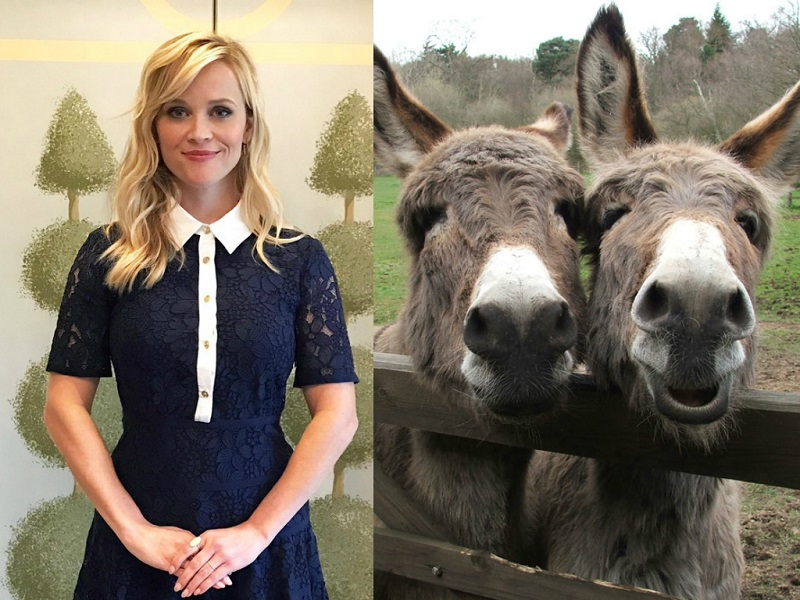 Celebrities And Their Unusual Pets_Reese Witherspoon