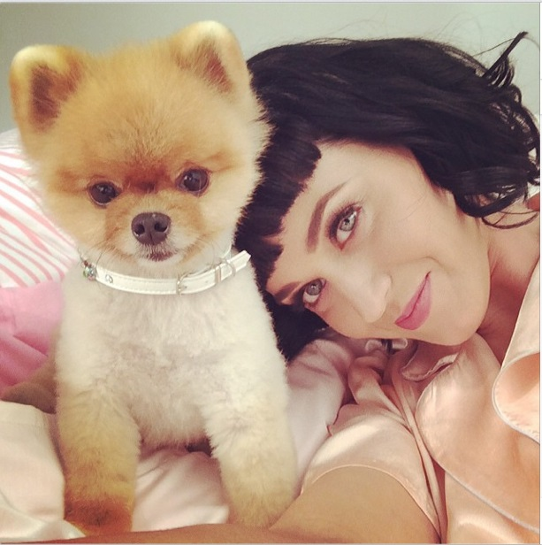 Hot Female Celebs With Their Pets_Katy Perry 2