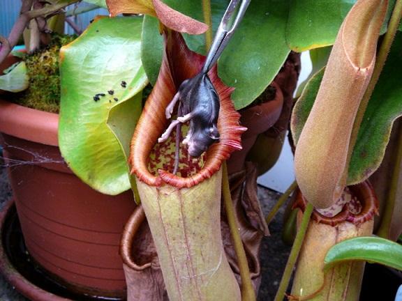 predatory plants_2