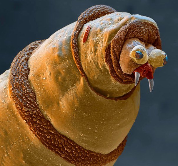 creatures of alien origin_Maggot
