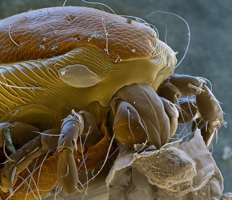 creatures of alien origin_Water Mite