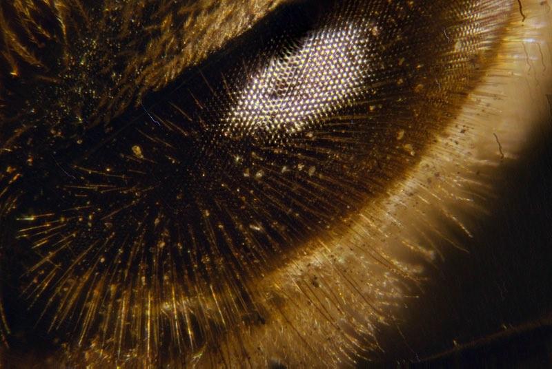 creatures of alien origin_bees
