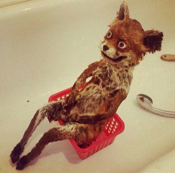 insta accounts_craptaxidermy